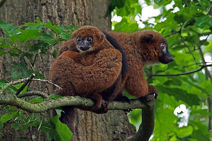 Il Sud del Madagascar