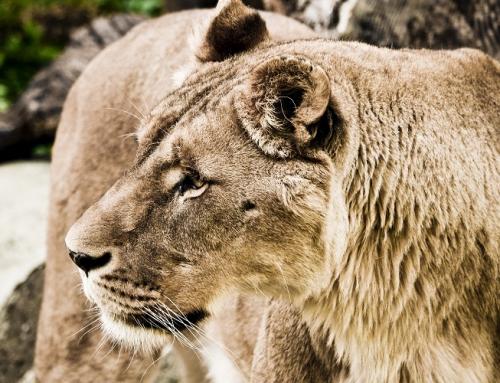 SUD AFRICA & SEYCHELLES13 notti
