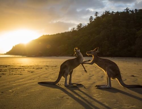AUSTRALIAN EXPERIENCE15 Giorni / 14 Notti