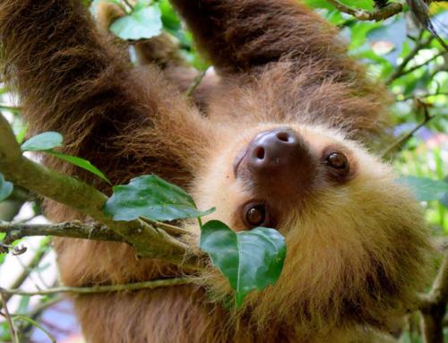 COSTA RICA – VULCANO PAOS – TERME DEL TABACON6 notti con guida in spagnolo e inglese