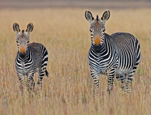 GLAMOUR AFRICA SPECIALE CAPODANNOPARTENZA 30 DICEMBRE DA LINATE
