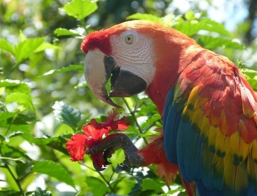 Estensione Foresta AMAZZONIA3 Giorni / 2 Notti